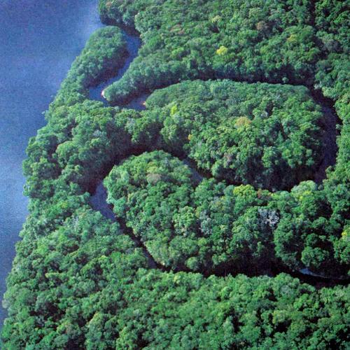 Изрезанный водой участок дождевого леса в бассейне Амазонки на первый взгляд кажется однородным, но на самом деле, как и весь лес в целом, включает большое количество растущих вперемежку видов деревьев. Во влажном, теплом лесу Амазонии на единице площади (равно как и в суммарном выражении) обитает больше видов растений и животных, чем в любом другом регионе земного шара. Одно время существовала теория, что это многообразие видов объясняется постоянством климата, но, как показано недавно, в действительности бассейн Амазонки все время страдал от таких ««возмущений»»,как ливневые потоки и затопления. В противоположность оледенениям, приводившим к массовым вымираниям на континентах, такие умеренные возмущения препятствуют вымираниям видов. Уничтожая часть представителей доминантных видов, они дают возможность укрепиться слабым видам