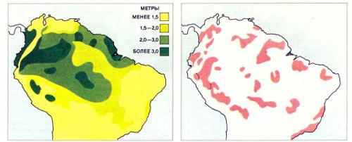 Картосхемы среднегодового количества осадков (слева) и ареалов различных видов бабочек (справа) показывают, что изолированные ««островки»», занимаемые отдельными видами, в целом совпадают с «пятнами» наибольшей влажности; часть из них приходится на возвышенности (не показаны). Эта корреляция (впервые отмеченная среди птиц) привела ученых к мысли о том, что изолированные области, занимаемые разными видами, возникли давно, возможно, в последний ледниковый период (70000 — 10000 лет назад). Первоначальная гипотеза утверждала, что во время оледенений низменные участки были аридными, а более влажные возвышенности превращались в рефугии (убежища») для различных видов. Эти виды развивались в изоляции и продолжали жить обособленно тогда, когда лес между «убежищами» восстанавливался. Новые данные позволяют предположить, что в этих гипотетических «убежищах» в ледниковом периоде было на самом деле слишком холодно, чтобы там могли существовать дождевые леса; на самом деле леса сохранялись, вероятно, в отдельных частях теплых низменных районов, которые вовсе не становились аридными. Эти новые выводы опровергают теорию рефугий, но согласуются с предположением, что климат в Амазонии испытывал значительные колебания