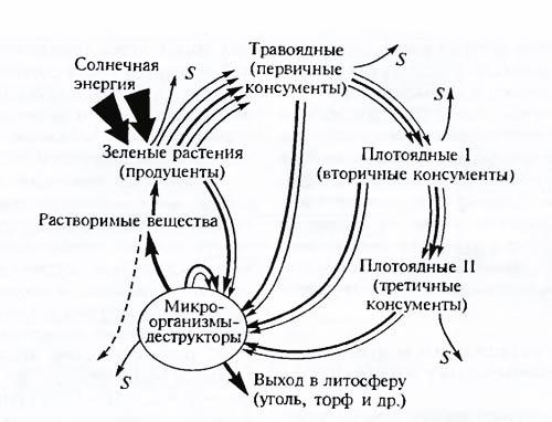 Схема большого биосферного