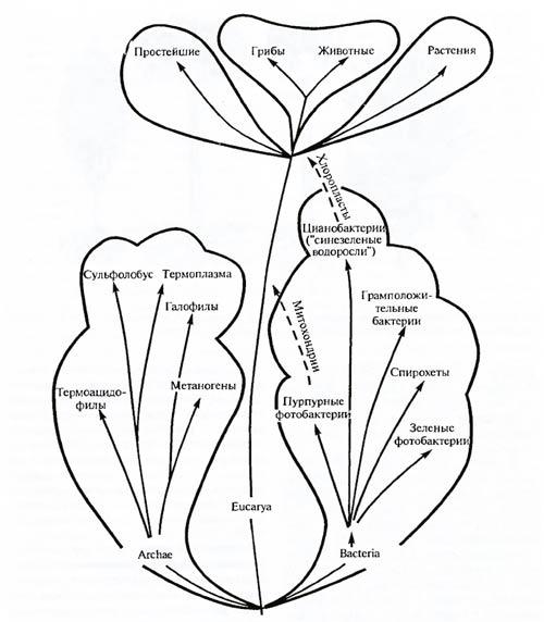 Основные пути эволюции растений.  Число видов ныне существующих растений достигает более 500 тыс., из них цветковых...