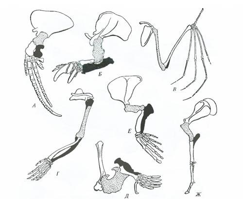 Схема строения скелета