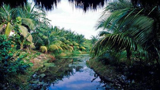 Влажные тропические леса Южной Америки (джунгли)