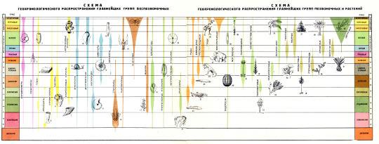 Схема геохронологического распространения главнейших групп беспозвоночных, позвоночных и растений